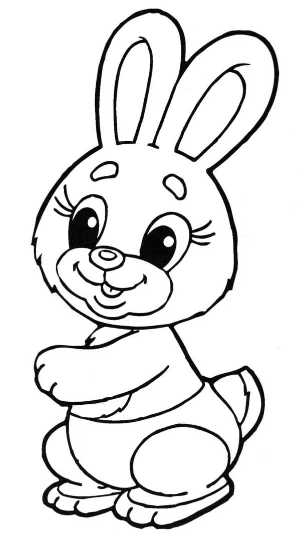 Заяц 5