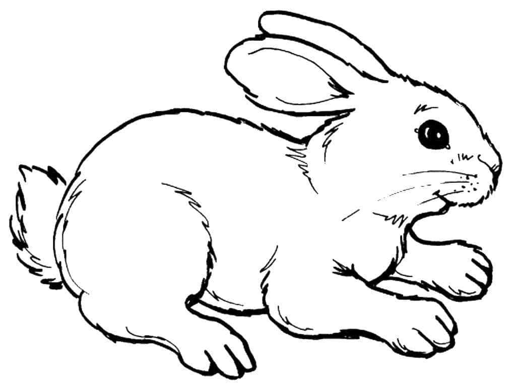 Заяц 4