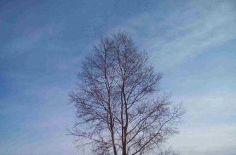 Осень дерево