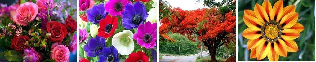 4 лишний цветы